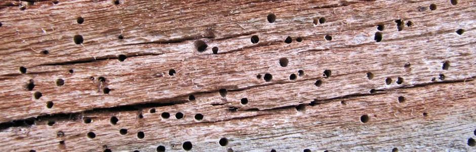 Cornelius termite control